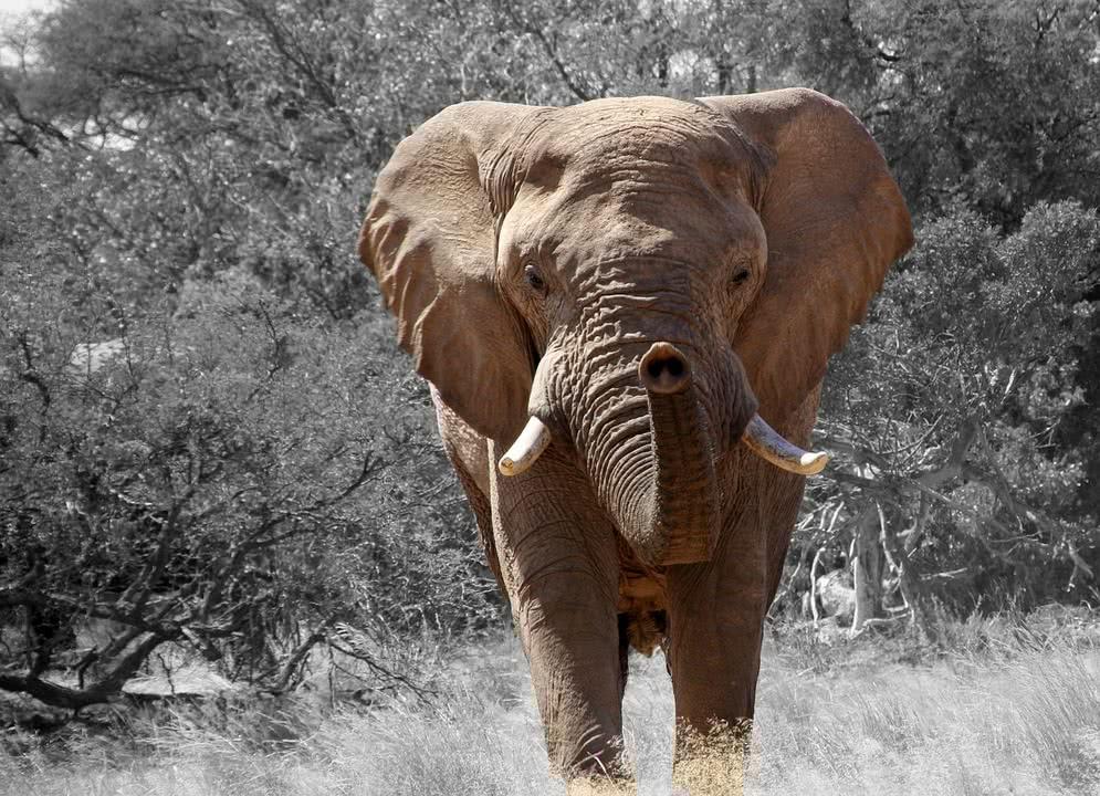 wann ist tag des elefanten tag des elefanten ist das n chste mal am sonntag dem 12 august 2018. Black Bedroom Furniture Sets. Home Design Ideas